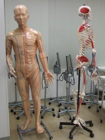 意外と知らない!骨粗鬆症にならないために、骨にもトレーニングが必要だった!?